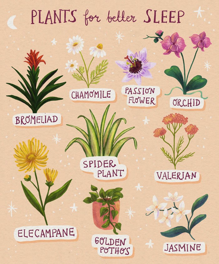 Plants-For-Better-sleep-